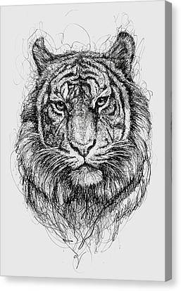 Tiger Canvas Print by Michael Volpicelli