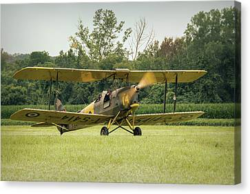 Tiger Moth Canvas Print by Guy Whiteley