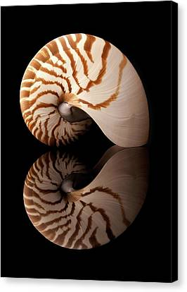 Tiger Nautilus Shell And Reflection Canvas Print by Jim Hughes