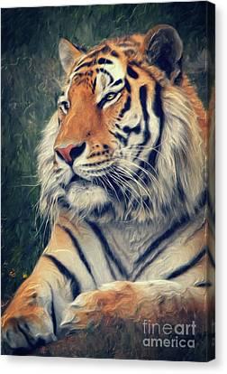 Tiger No 3 Canvas Print