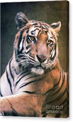 Tiger No 6 Canvas Print