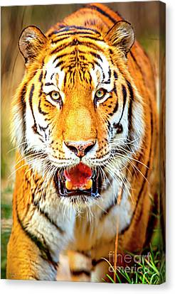 Tiger Canvas Print - Tiger On The Hunt by David Millenheft
