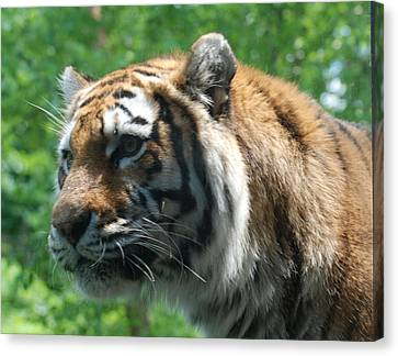 Canvas Print featuring the photograph Tiger Profile by Richard Bryce and Family