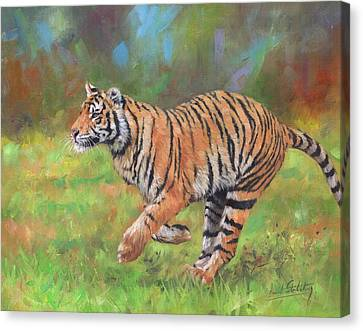 Canvas Print featuring the painting Tiger Running by David Stribbling