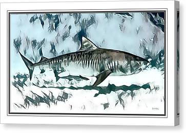 Tiger Shark Print  Canvas Print by Scott Wallace