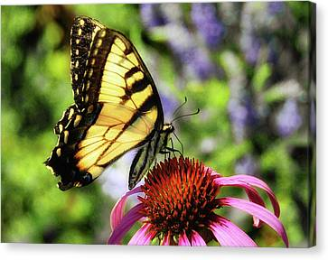 Canvas Print featuring the photograph Tiger Swallowtail by Elaine Manley