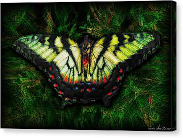 Tiger Swallowtail Canvas Print by Iowan Stone-Flowers