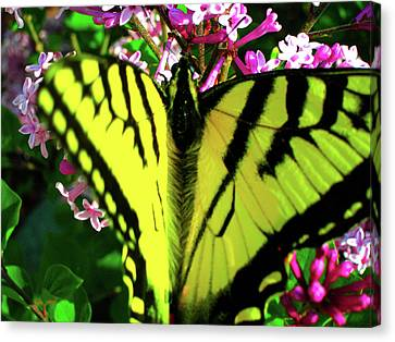 Tiger Swallowtail On Lilac Canvas Print by Randy Rosenberger