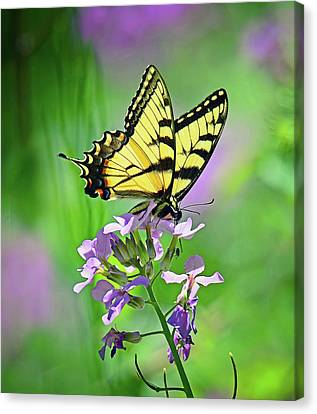 Canvas Print featuring the photograph Tiger Swallowtail by Rodney Campbell