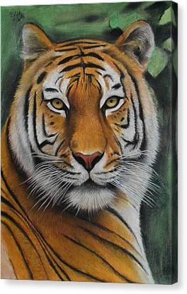 Tiger - The Heart Of India Canvas Print