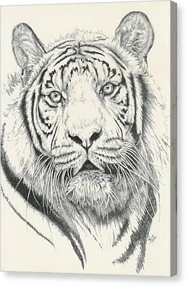 Tigerlily Canvas Print by Barbara Keith