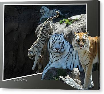 Tigers Out Of Frame Canvas Print