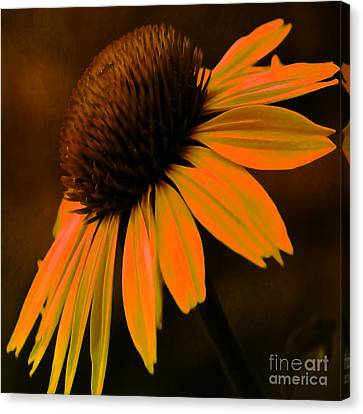 Tiki Torch Coneflower Canvas Print by Beverly Guilliams