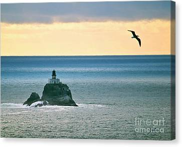 Canvas Print featuring the photograph Tillamook Lighthouse by Suzette Kallen
