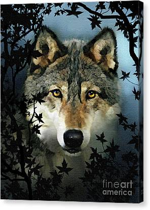 Timber Wolf Canvas Print by Robert Foster