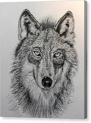 Timber Wolf Canvas Print by Stan Hamilton