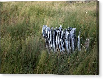 Weathered Stump Canvas Print by Scott Slone