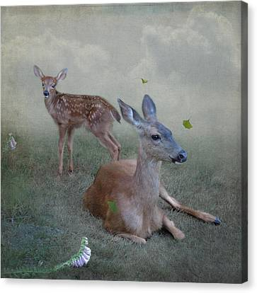 Canvas Print featuring the photograph Time Stops For Deer by Sally Banfill