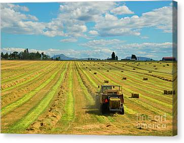 Time To Bale Canvas Print
