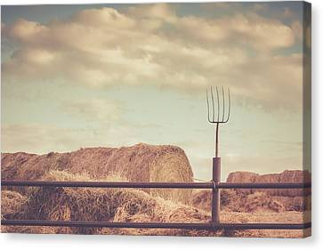 Time To Feed The Cattle Canvas Print by Debi Bishop