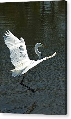 Time To Land Canvas Print