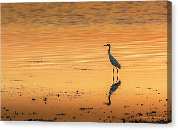 Seabird Canvas Print - Time To Reflect by Marvin Spates
