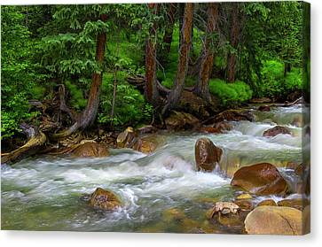 Canvas Print featuring the photograph Timeless by Tim Reaves