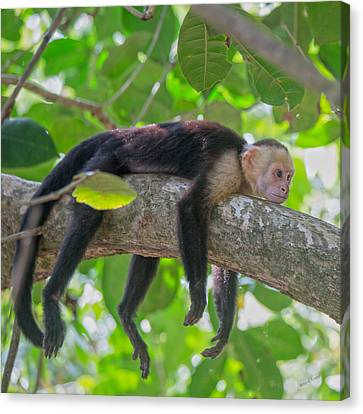 Tree Creature Canvas Print - Timeout by Betsy Knapp