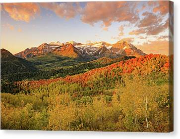 Timp Autumn Glow Canvas Print