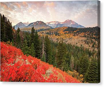 Timp With Red Oak Canvas Print by Johnny Adolphson
