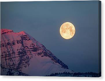Canvas Print featuring the photograph Timpanogos With The Pink Moon. by Johnny Adolphson