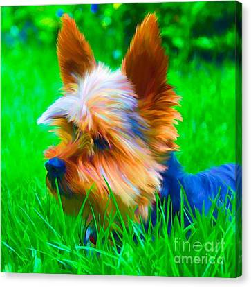 Tinky Canvas Print by Suzanne Batchelor