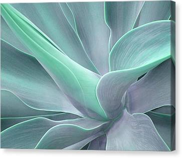 Tinted Agave Attenuata Abstract Canvas Print