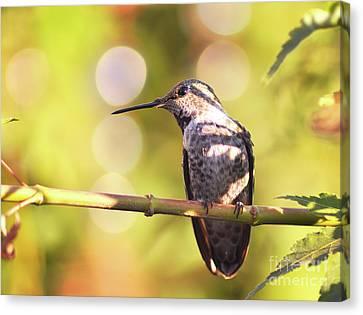 Tiny Bird Upon A Branch Canvas Print