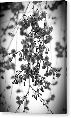 Tiny Buds And Blooms Canvas Print