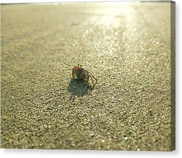 Tiny Crab On Sand Canvas Print
