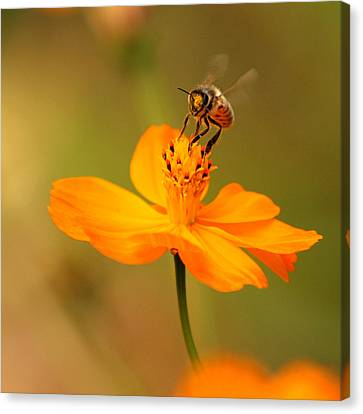 Canvas Print featuring the photograph Tiny Dancer by Marion Cullen