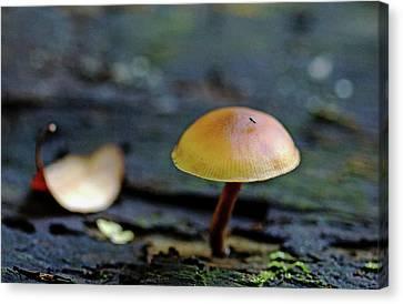 Tiny Mushroom Canvas Print