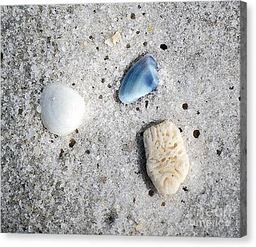 Tiny Sea Shells And A Piece Of Coral In Fine Wet Sand Macro Watercolor Digital Art Canvas Print by Shawn O'Brien