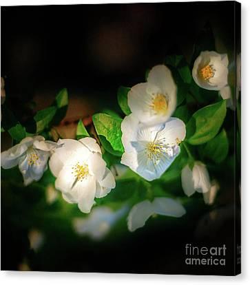 Canvas Print - Tiny White Azales by Tamyra Ayles