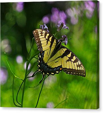 Tiny Wings Canvas Print by Robert Pearson