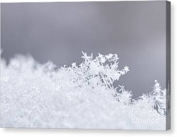 Canvas Print featuring the photograph Tiny Worlds I by Ana V Ramirez