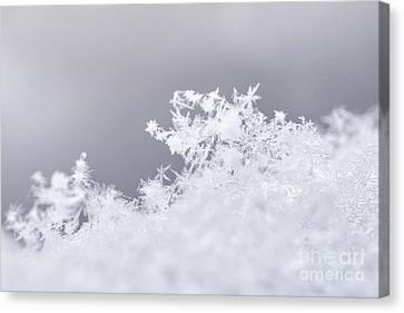 Canvas Print featuring the photograph Tiny Worlds II by Ana V Ramirez