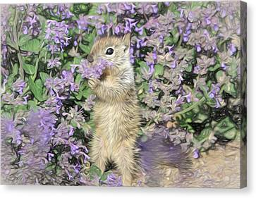 Squirrel Canvas Print - Tippy Toe Snack by Donna Kennedy