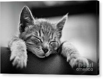 Tired .... So Tired Canvas Print by Alessandro Giorgi Art Photography