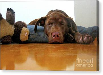 Tired Puppy And Bear Canvas Print