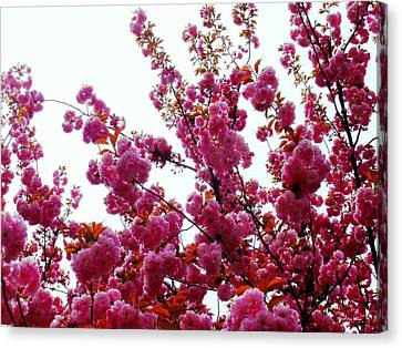 Tis The Season Canvas Print by Deborah  Crew-Johnson