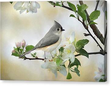 Animal Canvas Print - Titmouse In Blossoms 1 by Lori Deiter