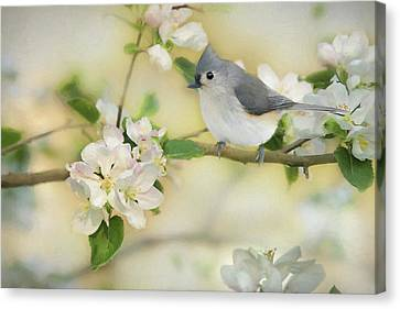Titmouse In Blossoms 2 Canvas Print