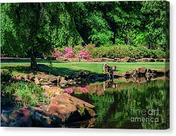 Taking A Break At The Azalea Pond Canvas Print